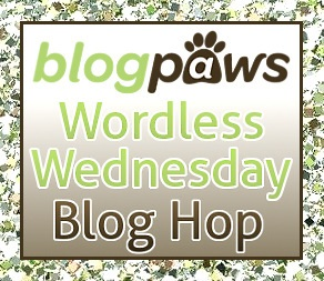 blog paws ww